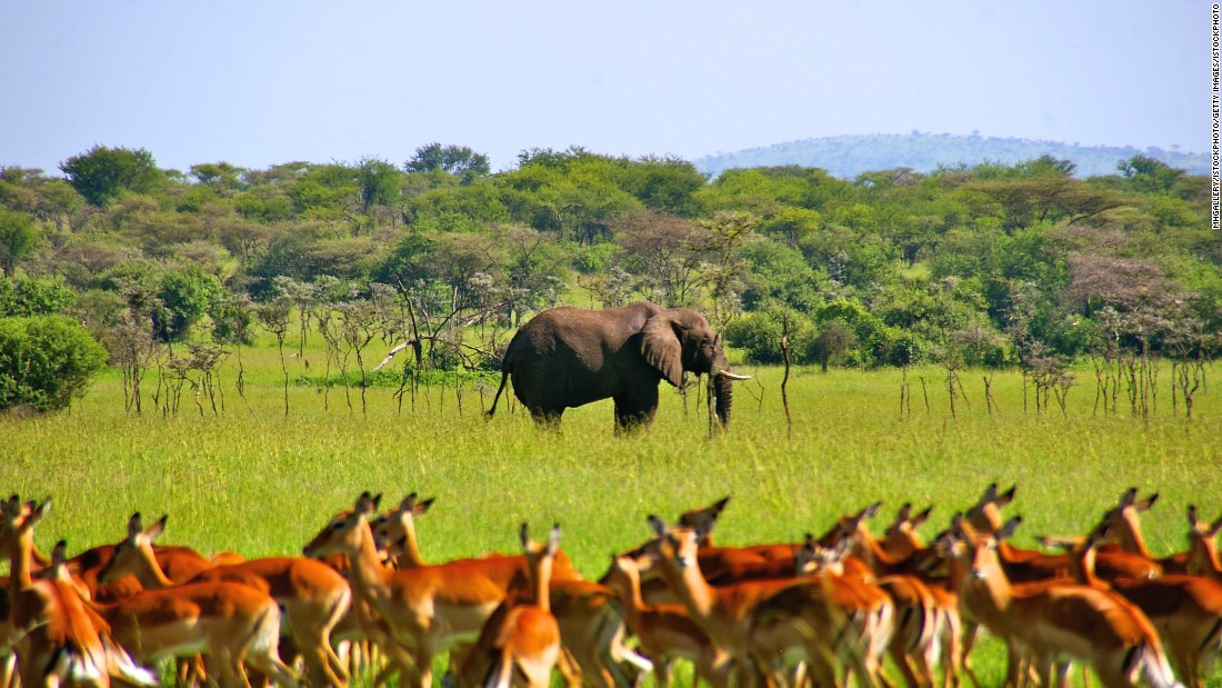 3 DAYS 2 NIGHTS MIKUMI NATIONAL PARK 3 Day(s) Wildlife Experience Zanzibar Tours & Safaris Ltd