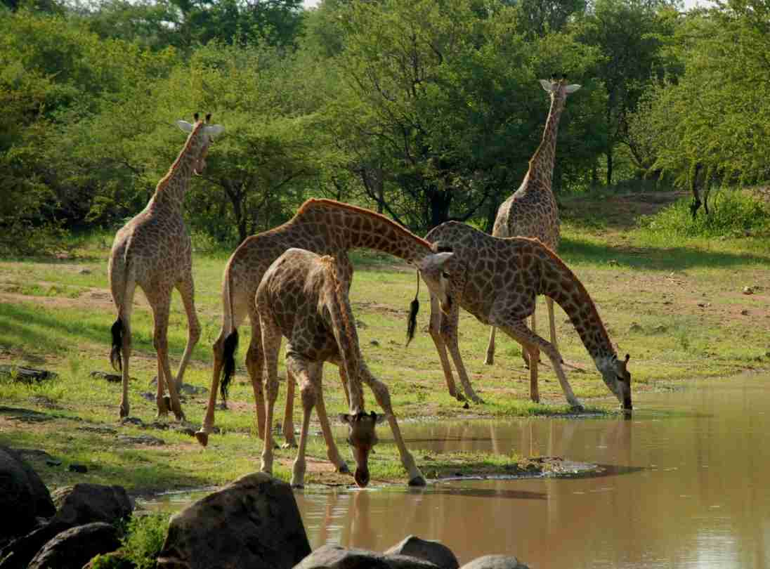 3 DAYS 2 NIGHT SAADANI NATIONAL PARK 3 Day(s) Wildlife Experience Zanzibar Tours & Safaris Ltd