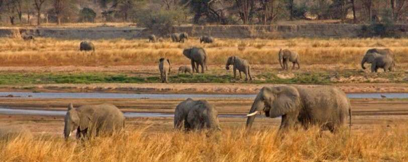 4Days Lake Manyara, Ngorongoro Crater and Tarangire 4 Day(s) Wildlife Experience Zanzibar Tours & Safaris Ltd