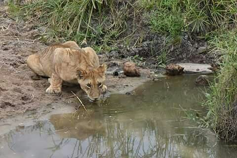 4 Days Ngorongoro Crater & Serengeti 4 Day(s) Wildlife Experience Zanzibar Tours & Safaris Ltd