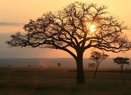 4 DAYS 3 NIGHTS RUAHA 4 Day(s) Wildlife Experience Zanzibar Tours & Safaris Ltd