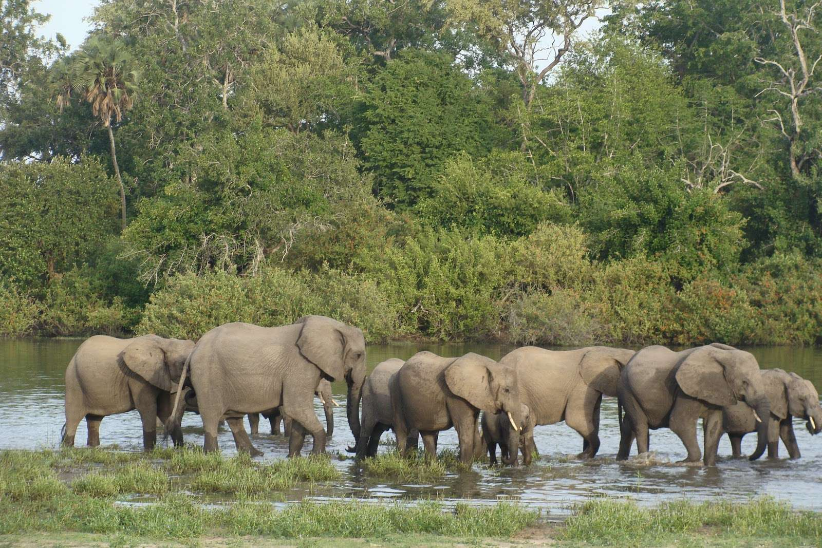 4 DAYS 3 NIGHTS SELOUS NATIONAL PARK 4 Day(s) Wildlife Experience Zanzibar Tours & Safaris Ltd