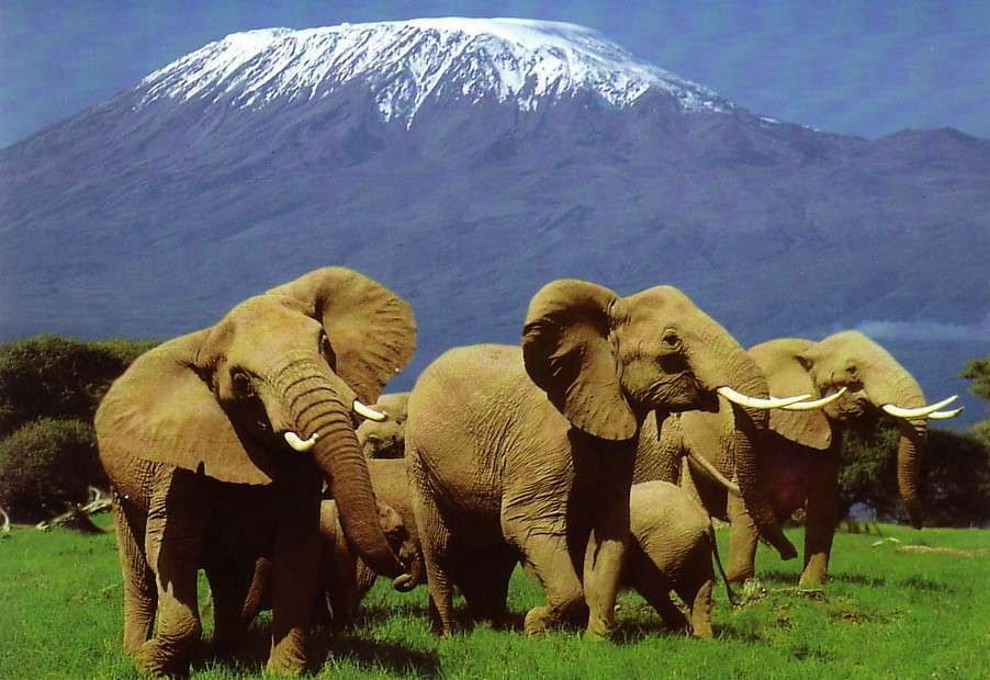 5 Days Tarangire, Serengeti & Ngorongoro crater  5 Day(s) Wildlife Experience Zanzibar Tours & Safaris Ltd