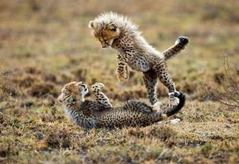 7 Days Lake Manyara,Serengeti,Ngorongoro Crater & Tarangire 7 Day(s) Wildlife Experience Zanzibar Tours & Safaris Ltd
