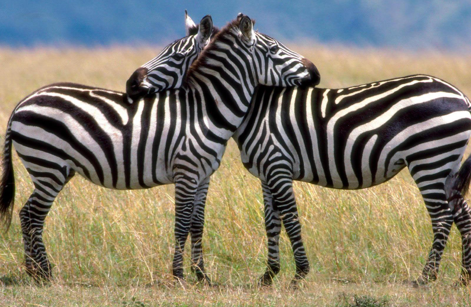 A Day Trip to Arusha National Park 1 Day(s) Day tour Experience Zanzibar Tours & Safaris Ltd