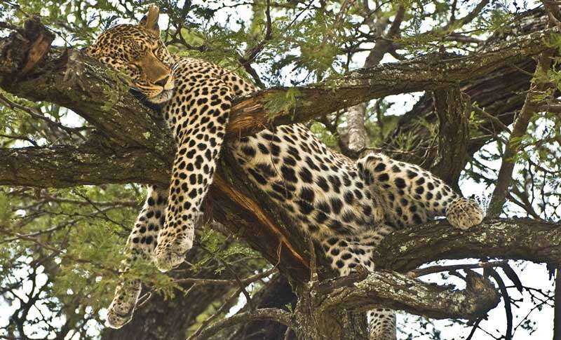 Lake Manyara Park day tour 1 Day(s) Wildlife Experience Zanzibar Tours & Safaris Ltd