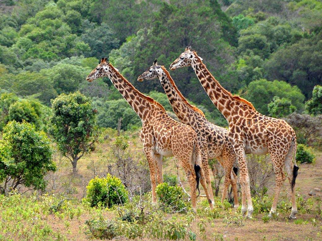 Walking Tour of the Ngorongoro Highlights 6 Day(s) Wildlife Experience Zanzibar Tours & Safaris Ltd