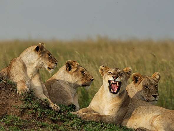 3 Days, 2 Nights - Northern Tanzania 3 Day(s) Wildlife Experience Zanzibar Tours & Safaris Ltd
