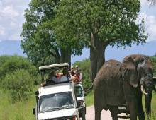 Tarangire park day tour 1 Day(s) Wildlife Experience Zanzibar Tours & Safaris Ltd