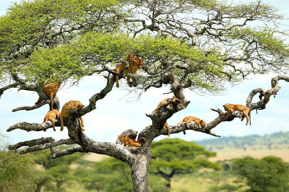 Lake Manyara, Ngorongoro Crater & Serengeti 5 Day(s) Wildlife Experience Zanzibar Tours & Safaris Ltd
