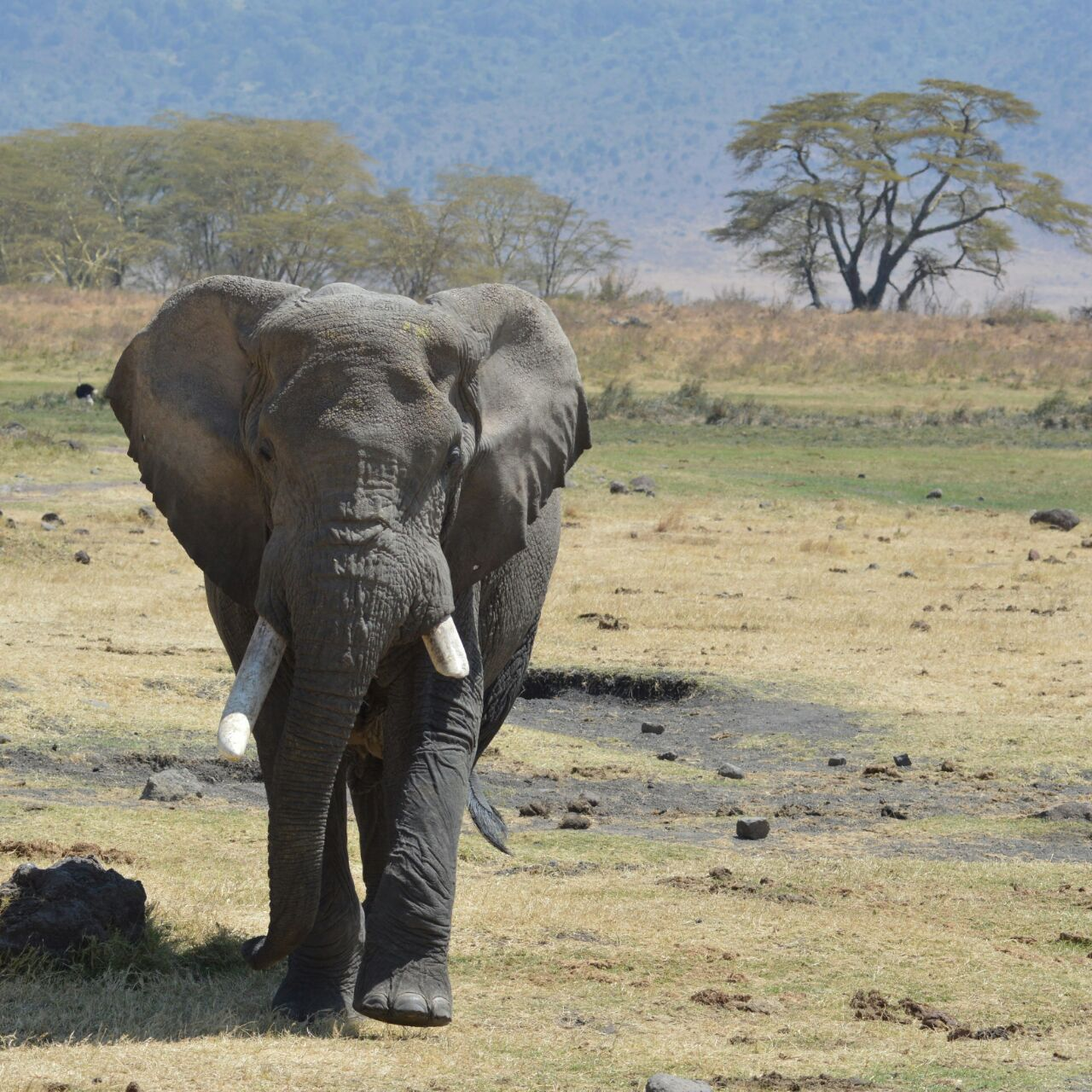 Lake Manyara & Ngorongoro Crater 4 Day(s) Wildlife Experience Zanzibar Tours & Safaris Ltd