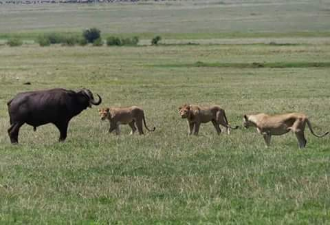 Lake Manyara, Ngorongoro Crater, Serengeti & Tarangire 6 Day(s) Wildlife Experience Zanzibar Tours & Safaris Ltd