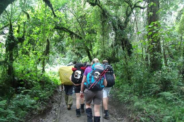 Northern Circuit Route 8 Day(s) Kilimanjaro Climbing Experience Zanzibar Tours & Safaris Ltd